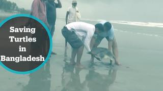 Rescue mission begins to save turtles