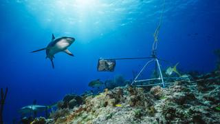 Nets to protect swimmers in South Africa are killing sharks | Money Talks
