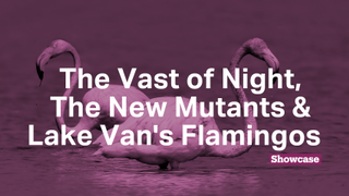 The Vast of Night   The New Mutants   Lake Van's Flamingos