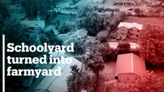 Kenyan schoolyard turned into farmyard amid Covid-19 shutdown