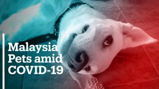 Pets in Malaysia abandoned due to COVID-19