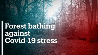 Forest bathing helps deal with Covid-19 stress