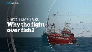 BREXIT TRADE TALKS: Why the fight over fish?