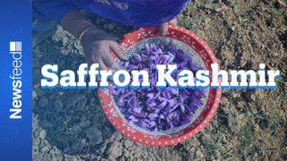 Kashmir's saffron finds hope in new technology
