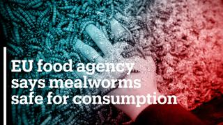 EU food agency says mealworms safe for consumption