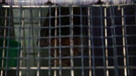 WHO urges halt to sale of live wild animals in food markets– latest updates