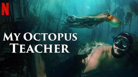 A story of a human and an octopus makes its way to the Oscars