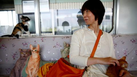 Cats cosy up with train commuters in Japan as part of a campaign for strays