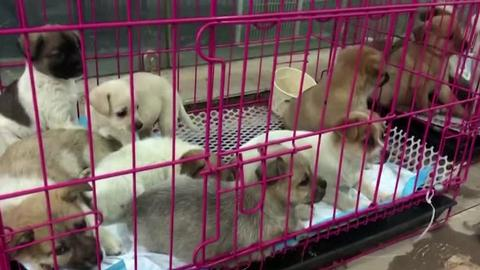 Live pets shipped in 'blind boxes' sparks outrage in China