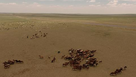 Herders of drought-hit Mongolia prepare for tough winter