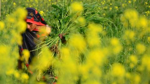 Landless women farmers in India respond to growing agrarian distress
