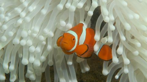 With the Great Barrier Reef at risk, Australia back on probation