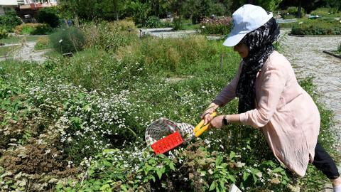 Visit Turkey's first botanical garden for medicinal plants