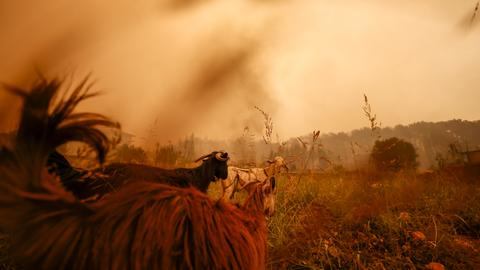 Turkey battles forest fires raging in country's south