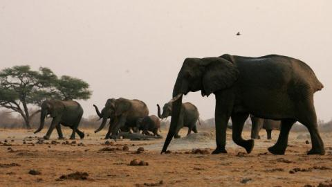 Zimbabwe to sell wild animals as precaution against drought