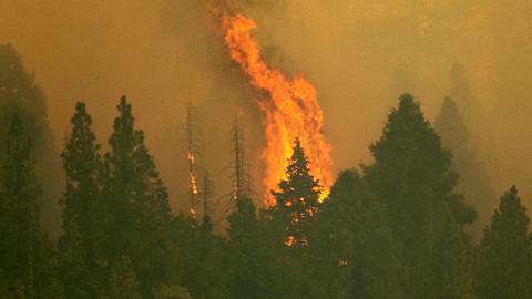 California fire crews wrap giant sequoias in foil as blaze nears