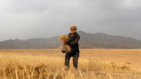 Taliban unveils food-for-work programme to tackle hunger, unemployment