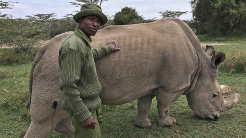 World's last male northern white rhino faces poaching threat