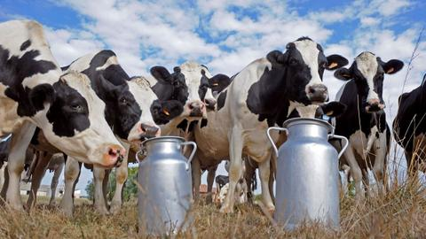 Can less flatulent cows help combat environmental pollution?