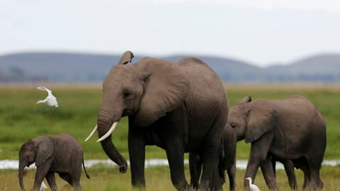 Spotting elephants from space for conservation
