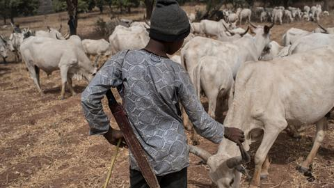 Farmers kill at least 30 herdsmen in northeast Nigeria, police say