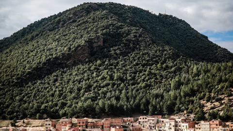 Morocco launches tree planting programme to reduce deforestation