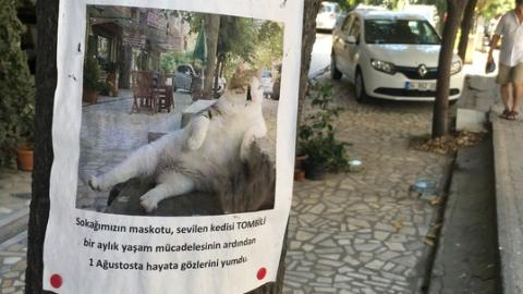 Set in stone: Istanbul's top cat