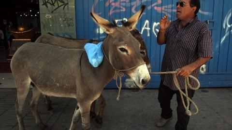 Nigeria bans export of donkeys as Chinese demand for skins lifts prices