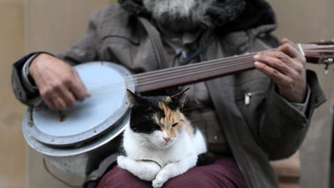 In Istanbul, cats rule the streets