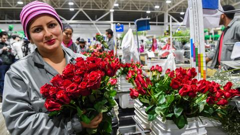 Valentine's Day a rosy opportunity for jobless Colombians