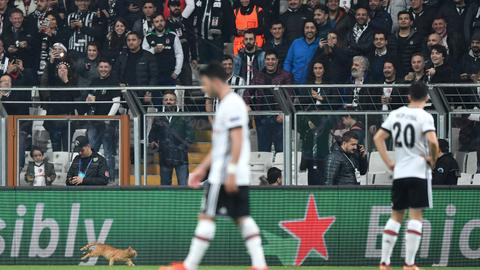 Cat's incredible! Besiktas charged after bizarre Champions League hold-up