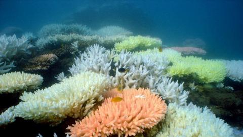 Australia to open more marine parks to commercial fishing