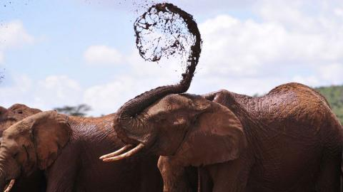 Africa's elephant population lowest in 25 years