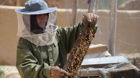 Busy bees turn Afghan schoolgirl into a successful apiculturist