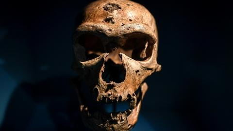 Scientists set eyes on Neanderthal 'brain'