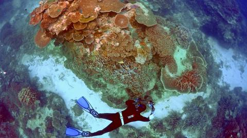 Australia announces $380 million funding for Great Barrier Reef