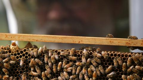 EU court upholds insecticide ban to protect bees