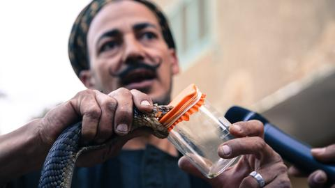 This Egyptian man wrestles with deadly reptiles, extracts venom for sale