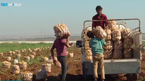 Turkey turns to Syria for potatoes