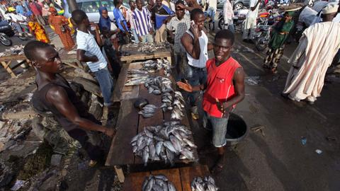 Nigeria seeks to boost local fish production amid high costs