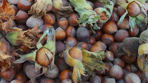 Turkey's hazelnut farmers hit by floods, currency fluctuations