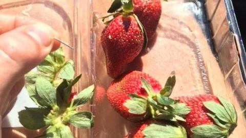 Australia launches probe into strawberry needles