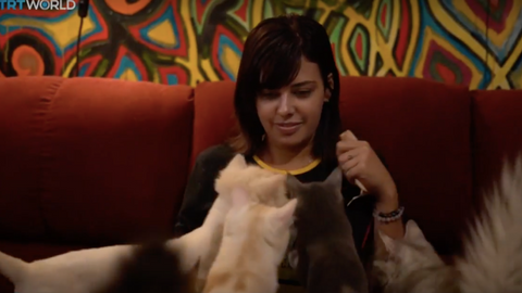 Egypt's new custom tax claims an unlikely victim: felines