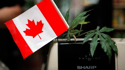 Canada legalises marijuana, but illegal edibles are a headache