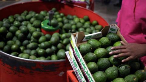 Avocados banned from some UK cafes over environmental concerns
