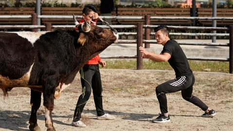 Fighters mix kung fu and bullfighting in China