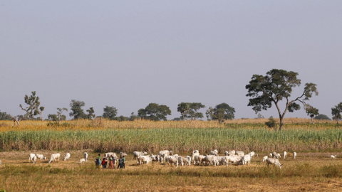 Nigeria saw over 3,600 deaths in farmer-herder clashes – Amnesty