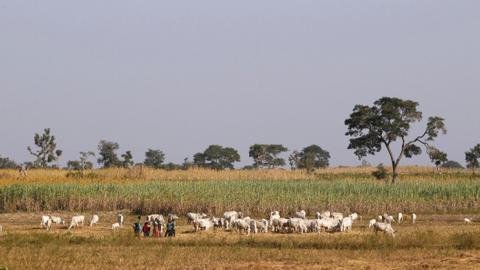Nigeria saw over 3,600 deaths in farmer-herder clashes – Amnesty