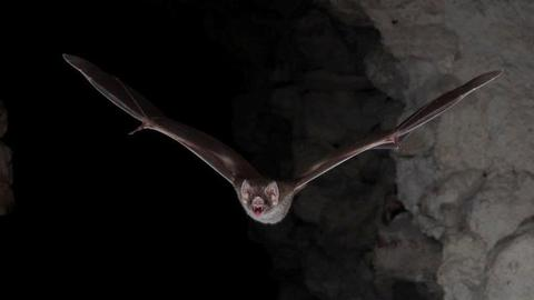 Heatwave is stressing out bats in Australia