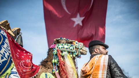 Inside camel wrestling in Turkey